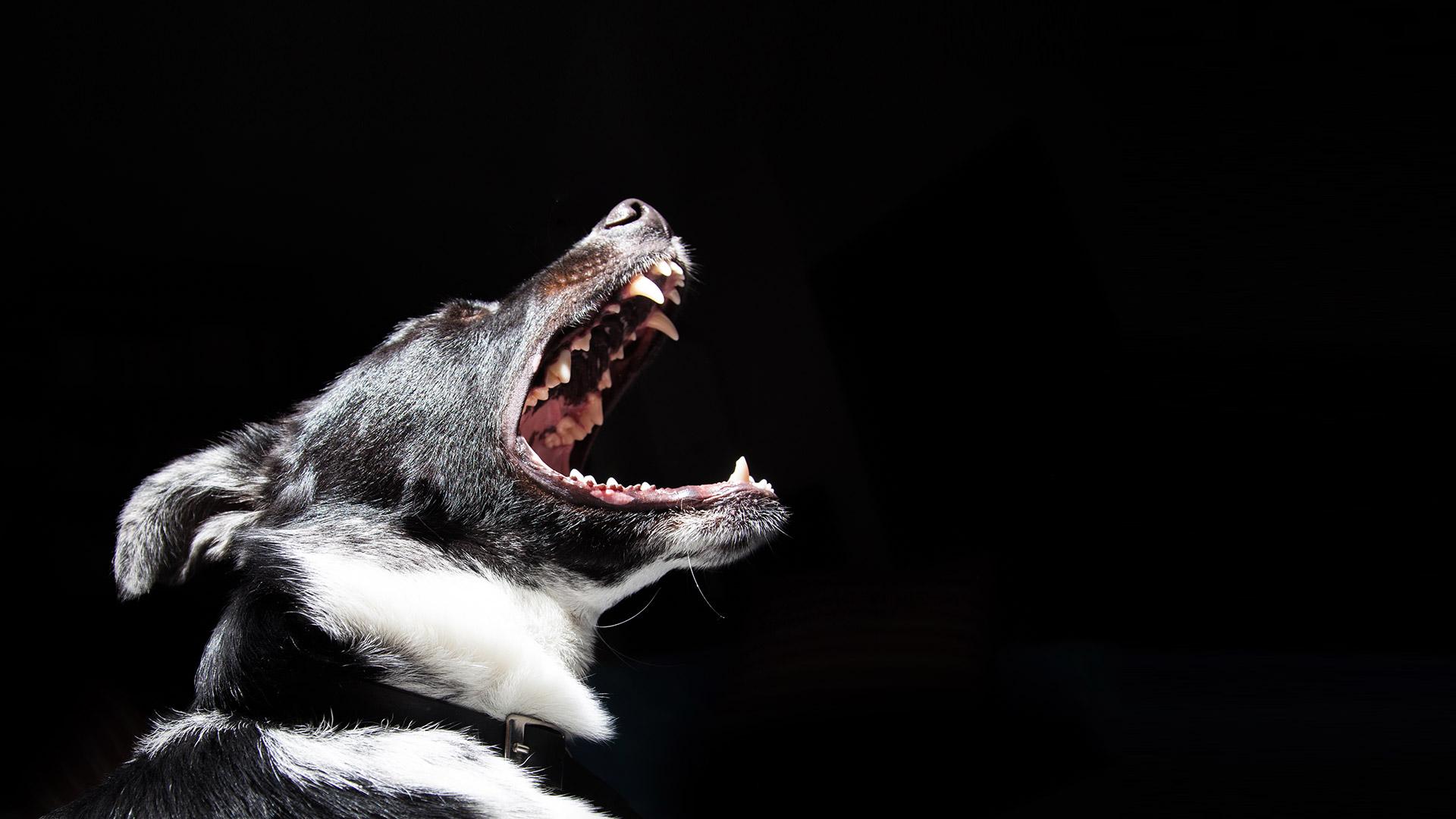 dogbg_dark1